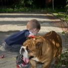Собака для ребенка: лучшие породы для детей, рекомендации 4