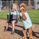 Собака для ребенка: лучшие породы для детей, рекомендации 5