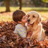 Собака для ребенка: лучшие породы для детей, рекомендации 13