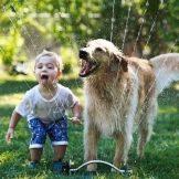 Собака для ребенка: лучшие породы для детей, рекомендации 14