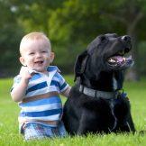 Собака для ребенка: лучшие породы для детей, рекомендации 15