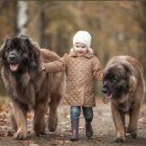 Собака для ребенка: лучшие породы для детей, рекомендации 16