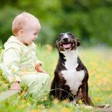 Собака для ребенка: лучшие породы для детей, рекомендации 10