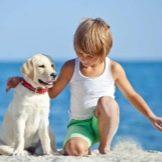 Собака для ребенка: лучшие породы для детей, рекомендации 11