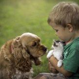 Собака для ребенка: лучшие породы для детей, рекомендации 12