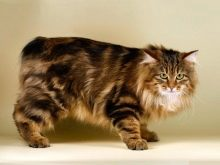 Трехцветные кошки  какие разновидности окрасов бывают