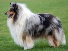 Щетка для собаки с длинной шерстью
