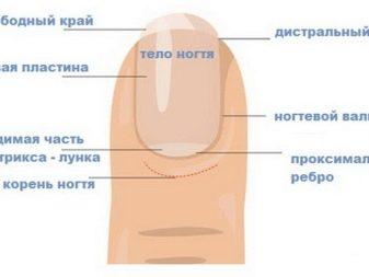 Болезни ногтей после наращивания