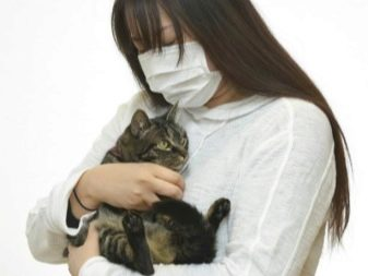 На какую кошку не бывает аллергии