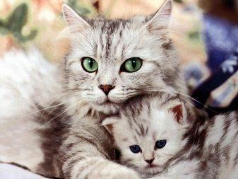 Как сделать кошку ласковой секреты правильного воспитания