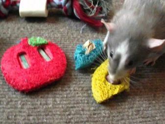 Игрушка и крыса