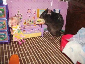 Крыса и детский дом