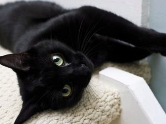 Все породы кошек черного