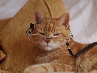 Сколько лет живут кошки в домашних условиях и от чего зависит продолжительность жизни?