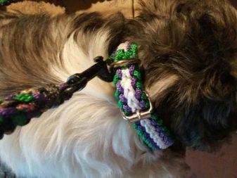 Ши-тцу: все о собаке, фото, описание породы, характер, цена 6