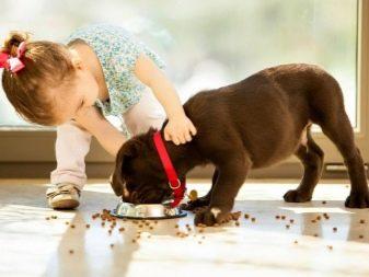 Собака для ребенка: лучшие породы для детей, рекомендации 17