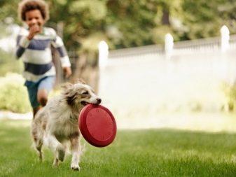 Собака для ребенка: лучшие породы для детей, рекомендации 18
