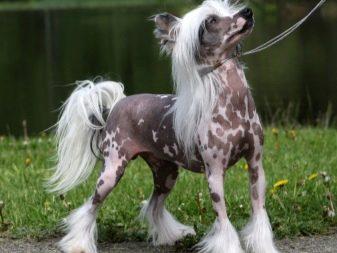 Собака для ребенка: лучшие породы для детей, рекомендации 20