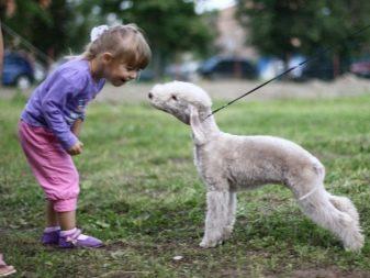 Собака для ребенка: лучшие породы для детей, рекомендации 21