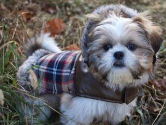 Собака для ребенка: лучшие породы для детей, рекомендации 22