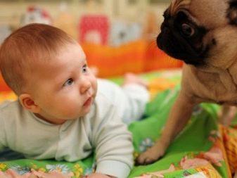 Собака для ребенка: лучшие породы для детей, рекомендации 23