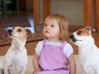 Собака для ребенка: лучшие породы для детей, рекомендации 24