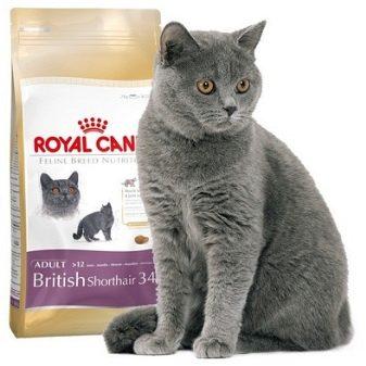 Порода кошек британец как кормить