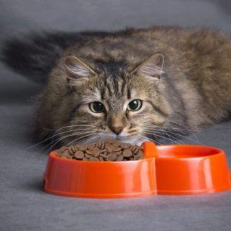 Как приучить кошку есть мокрый корм
