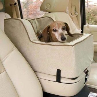 Транспортировка собак в автомобиле