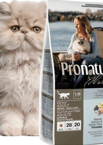 Шотландская вислоухая кошка питание котенка