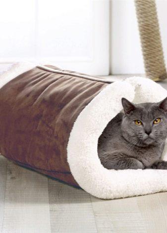Шотландская порода кошек лиловая thumbnail