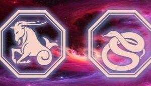 Характеристика Мужчины Козерога, рожденного в год Змеи