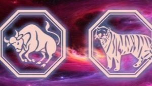 Мужчина Телец-Тигр: характеристика и совместимость