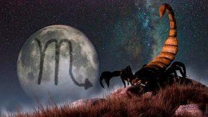 Совместимость Скорпиона со Скорпионом в различных сферах жизни