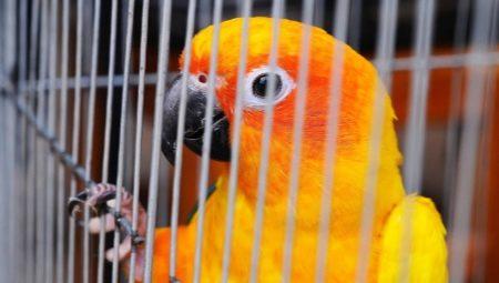 Изготовление клеток для птиц своими руками