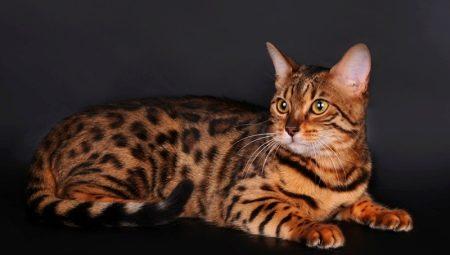 Кошка В Тигровом Белье