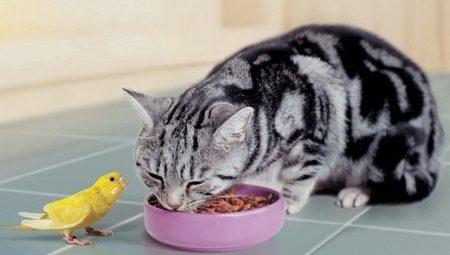 Чем кормить шотландскую прямоухую кошку?
