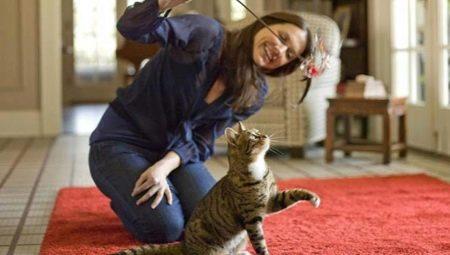Игрушки для кошек: виды и тонкости выбора