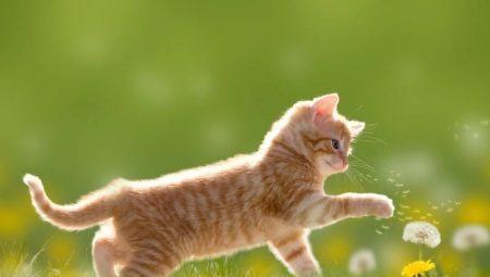 Рыжие коты: как они себя ведут и какими бывают?