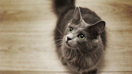 Все о кошках породы нибелунг