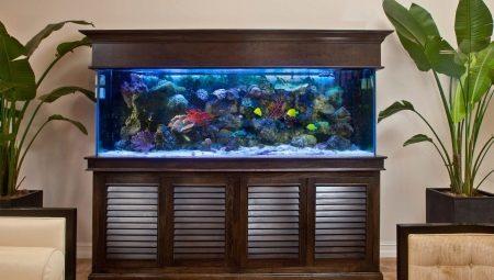 Аквариумы на 100 литров: размеры, сколько рыб можно держать и какие подойдут?