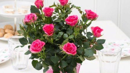 Выбираем горшочные цветы на 8 Марта