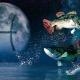 Характеристика и совместимость Рыб, рожденных в год Крысы
