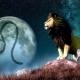 Мужчина Лев в любви и отношениях