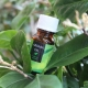 Масло чайного дерева от прыщей: свойства, рекомендации по выбору и использованию