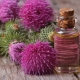 Свойства и применение репейного масла
