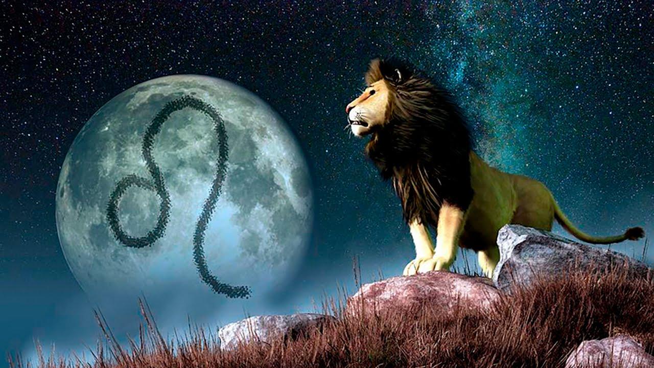Картинки лунных львы постарались показать