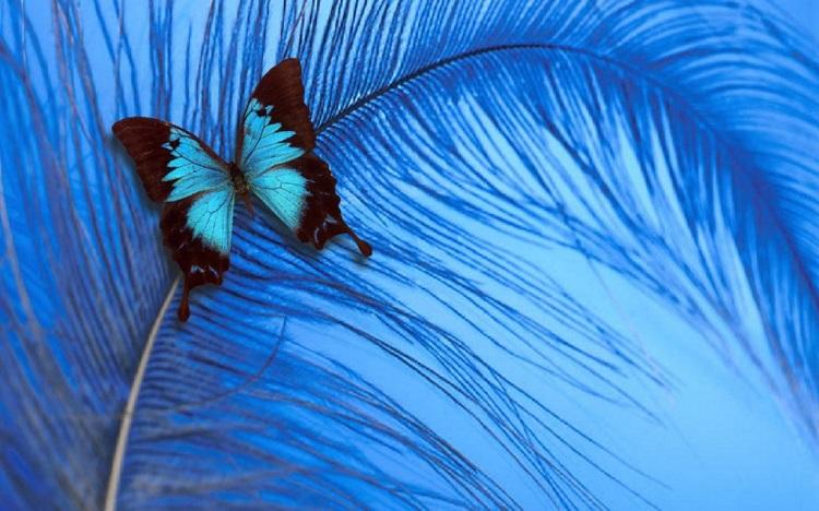 Люди которые любят голубой цвет