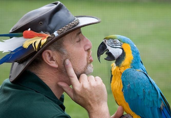 Говорящий попугай (54 фото): какие породы самые разговорчивые{q} Как научить попугая разговаривать{q}