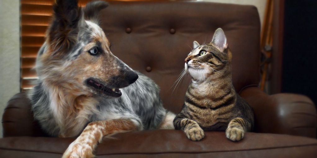Как подружить кошку с собакой в квартире? Как познакомить котенка с щенком? Как их примирить? Причины вражды и соперничества